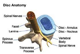 disc_anatomy