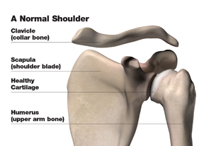 normal_shoulder_w