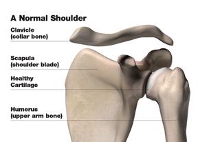 normal_shoulder_w
